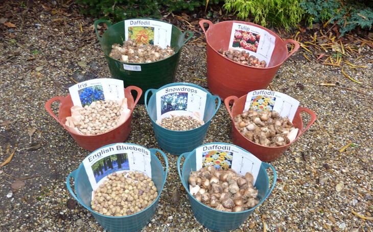 bulbplanting1
